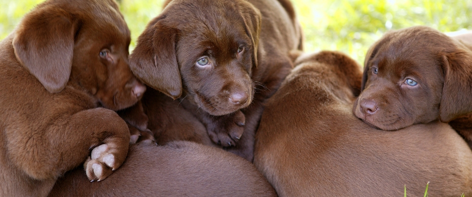Dog Breeders vs  Puppy Mills: What is the Distinction